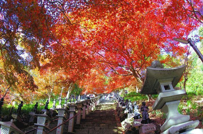 心を掴まれるような画像はありましたか?この秋は「この景色が見たい!」という紅葉の絶景スポットに出かけてみてはいかが?この時季限定の景色に会いにいきましょう。ぜひ秋のおでかけ計画の参考にしてみて下さいね。  ※写真は昼間の大山寺(神奈川県)
