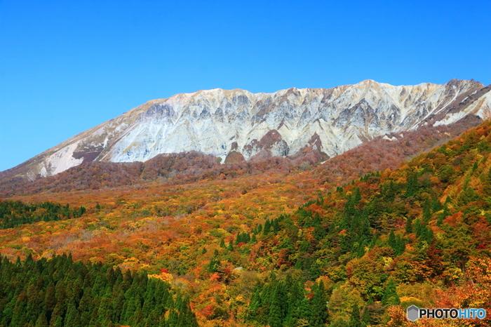 鳥取県江府町にある「鍵掛峠(かぎかけとうげ)」は標高910m。白肌が美しい「南壁」を眺める一番のビューポイントです。手前には大山のシンボル、ブナ林が広がります。グラデーションのように色づいた七色の紅葉と所々に見える緑、南壁の白とのコントラストが美しく、ため息が出るほどの絶景です。