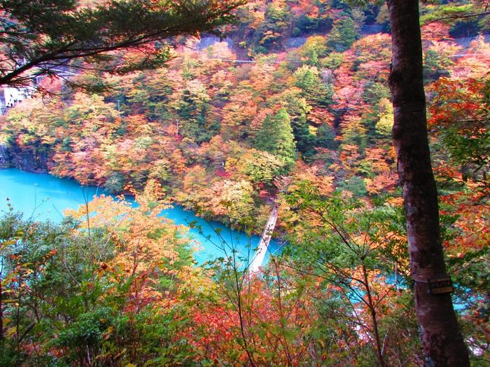 寸又峡(すまたきょう)は静岡県にある「21世紀に残したい日本の自然100選」「新日本観光百選」にも選ばれた景勝地です。「寸又峡プロムナード」は1周約90分の道のりを楽しむ散策路で、紅葉の時季は渓谷の広大な自然が赤やオレンジに染まるのを楽しめます。  また、南アルプスの麓にある大間ダムにせき止められた湖は目を疑うようなミルキーブルー。紅葉とのコントラストは文句なしの絶景です。