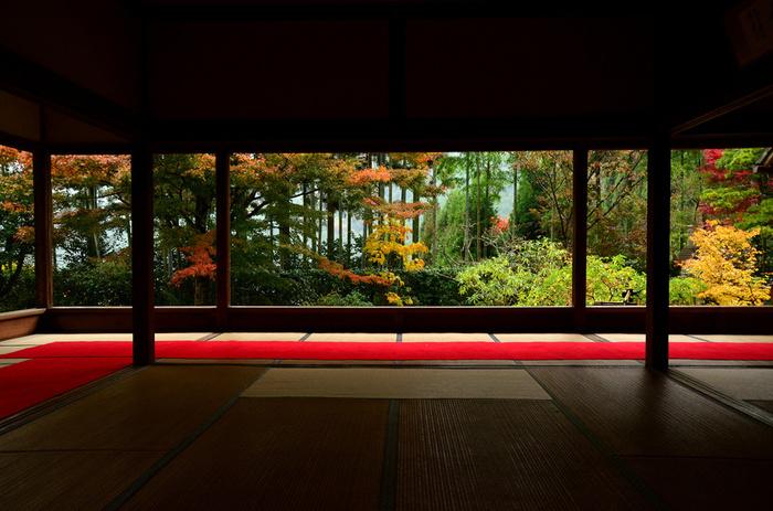 京都の大原エリアにある「宝泉院(ほうせんいん)」。「立ち去りがたい」という意味を持つ庭、盤桓園(ばんかんえん)の「額縁庭園」が一番の見どころです。寺のシンボルでもある樹齢700年という五葉松をはじめ色鮮やかな紅葉が楽しめます。