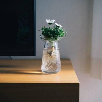 |@tn_wld さんより  植物が、お家の中にあるのと無いとじゃリラックス効果にすごく差が出るような気がしませんか。こちらのAQUA CULTURE VASEは、水耕栽培のためのフラワーベース。取り外し可能な受け皿とベースの2つのパーツで構成されているので、お水をかえる時も植物を傷めずに交換できて◎。