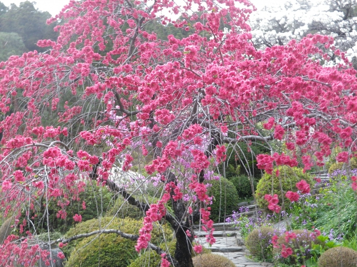 お花の寺としても人気の観光名所です。季節ごとの様々な花を楽しみに訪れる人も多いようです。