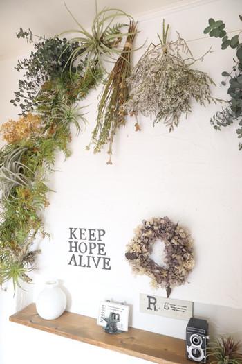 お部屋に入るのがワクワクするような素敵な演出です。 雑貨との相性も良く、植物によって見せたい雰囲気を伝えられるところも◎