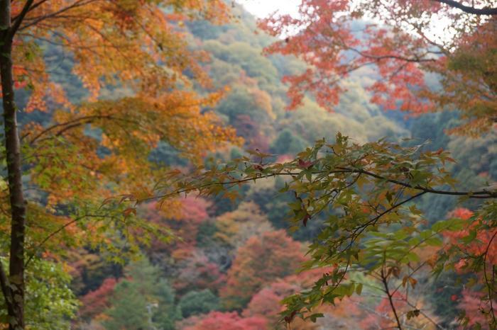 秋の紅葉。庭の紅葉と山の紅葉が重なり、趣ある光景です。