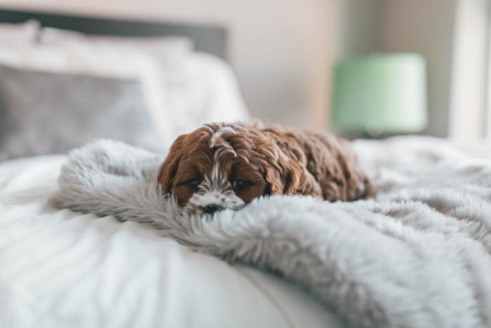 会社から帰ってきたり家事を終え、ご飯を見ながらネットやTVを見ているうちにもう寝る時間。 忙しい割には毎日なんとなく過ごしているようで、「もっと有意義に過ごせたら…。」と思いませんか? 良い睡眠のためにはメリハリのある生活が大切です。