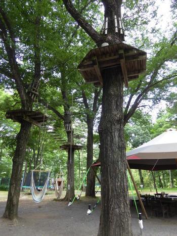 敷地内にある樹の上の冒険施設「スウィートグラス・アドベンチャー」は、最高・樹上10メートルの高さから飛び立つスリルと爽快感が味わえて、大人も子供も楽しめるスポットです♪