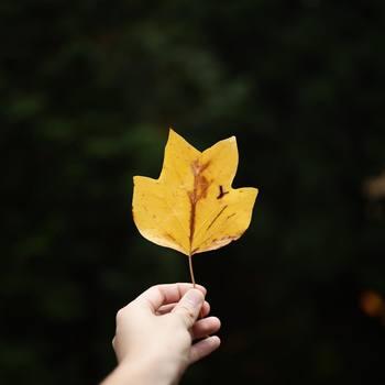 まだ暑さを感じる9月ですが、夏か秋かと言われれば「秋」と答える方が多いのではないでしょうか?虫の音や夕暮れ、秋カラーのファッションが秋の訪れを感じさせてくれますよね。1日のうちの1/3を過ごすベッドルームから、少し早めの秋支度、始めてみませんか?