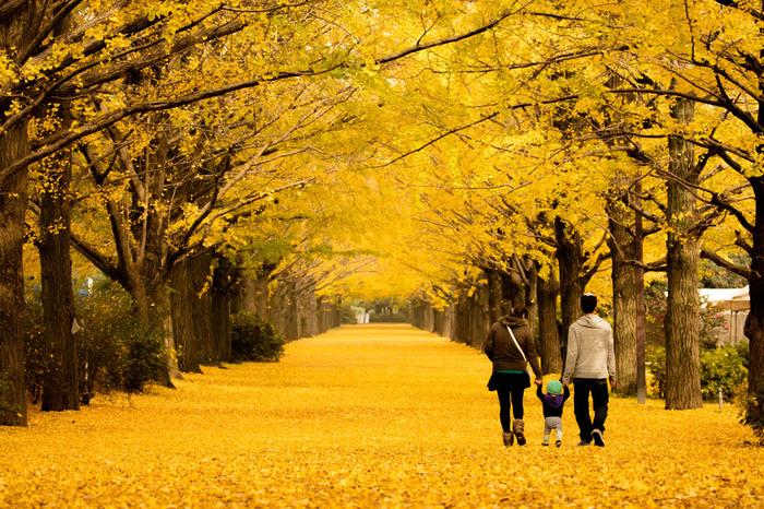 上も下も「黄色」の世界。イチョウのトンネルをくぐりながら、天然の黄色の絨毯の上をお散歩。この時季限定の贅沢な時間が過ごせます。公園内は他にも日本庭園などの紅葉スポットがありますが、このイチョウ並木も見逃せない場所。都内でもこんな景色が見られますよ。