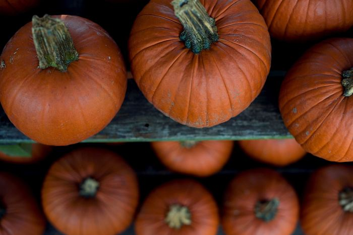《かぼちゃ》 まるごとなら常温で保存するのが最適。追熱が発生して、甘味が増し、さらに栄養価もUPするといわれています。直射日光や湿気に弱いので、風通しのよい冷暗所での保存がおすすめ。かぼちゃはカットしてしまうと、糖度が高いめ日持ちしません。切ったら冷蔵庫に入れましょう。