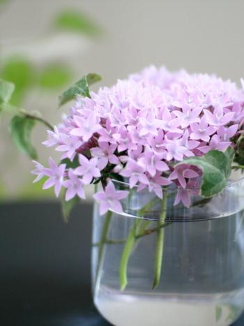 そこにあるだけで、明るい気持ちにしてくれる素敵なお花を、リビングやダイニングに飾りましょう。メインルームのほかにも、玄関やトイレなどゲストの目が触れるところにさり気なくあると、おもてなしの気持ちも伝わりそうですね。