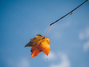 本格的に乾燥が増す冬を迎える前に、スキンケアを見直して、しっかり肌対策を始めましょう。