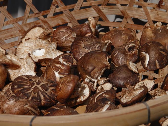 椎茸は乾燥させることで旨味と香りがアップします。その美味しさと栄養素がギュッと凝縮されているのが「椎茸だし」です。