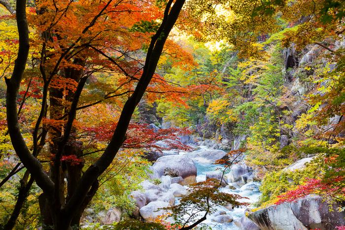 """甲府市の北部に位置する「御嶽昇仙峡(みたけしょうせんきょう)」は、""""日本一の渓谷美""""といわれ、富士山や兼六園などとともに国の特別名勝にも指定されています。自然がつくり出した花崗岩(かこうがん)の断崖や奇岩、清澄な水の流れや季節の移ろいなどを、渓谷沿いの遊歩道を散策しながら楽しめます。"""