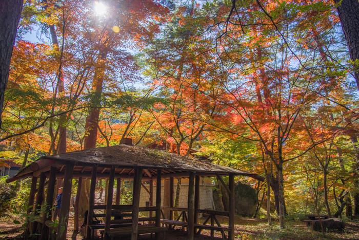 「天鼓林」とは、天然の太鼓のような林のこと。地盤の固い林の中で強く足踏みすると、太鼓のような「ポンポン」という共鳴音がするそうです。奥秩父の山中特有の珍しい現象で、昇仙峡の天鼓林は特に澄んだ良い音がするのだとか。
