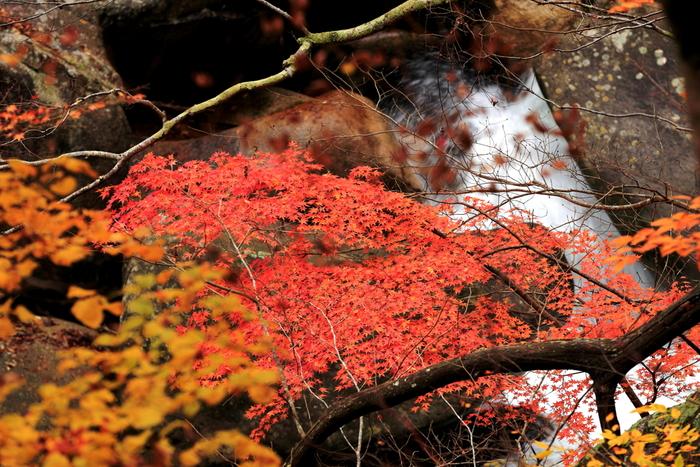 紅葉の綺麗な景色と美味しいぶどう、秋の山梨を楽しみに出かけてみてくださいね。
