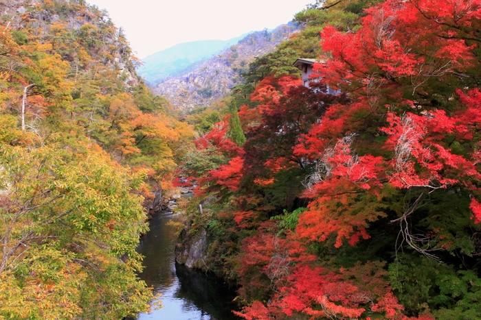 長瀞橋の上からの紅葉も見ごたえがありますね。