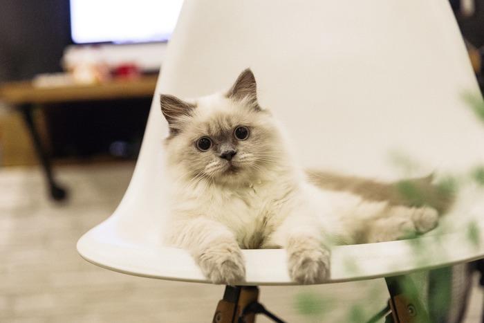 椅子も人も、形・サイズ・硬さがそれぞれに異なるもの。実際に座ってみないと相性は分かりません。一生使うものですから、お店に出向いて、座り心地や感触だけでなく、色や風合いなどが部屋のインテリアと合うのかもチェックしましょう。