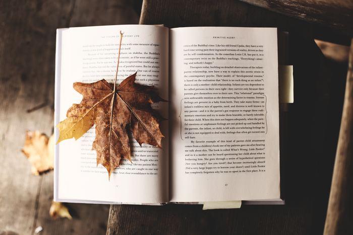 """""""秋好きさん""""に向けた、これからの季節にしてみたいことをいくつかご提案します。 今年はいつもよりもっと素敵な秋にしましょう!"""