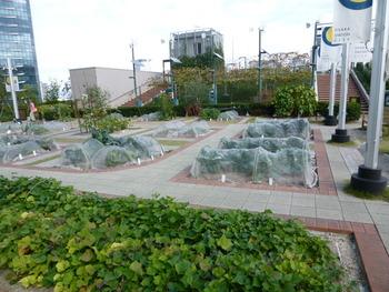 都市緑化の動きが進む中、ビルの屋上に庭園を造る例がみられていますが、最近は庭園ではなく「菜園」を作ることも。その菜園の区間を区切って、利用希望者に貸し出している例もみられます。都会のビルの屋上で野菜を作るなんて意外な組み合わせ!これも「都市農業」のひとつですね。