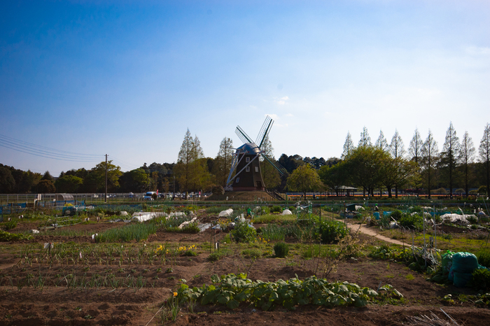 自治体が所有している都心の「市民農園」「区民農園」は人気が高く、利用希望者が殺到する自治体もあります。民間の「シェア畑」に比べると料金がリーズナブルなのが魅力です。