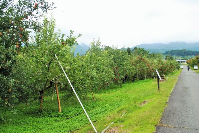 【「田園プラザ川場」の北側、薄根川に沿って伸びるりんご畑の遊歩道。花の頃も、実がなる秋も素晴らしい景色が広がる。】