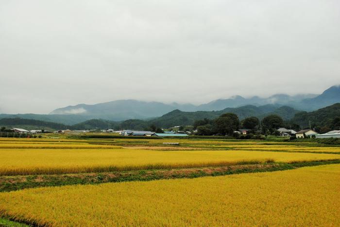 川場村は、群馬県北東部、日本百名山の一つで知られる武尊山(ほたかやま)の南麓に広がる農山村。山の連なりを遠景に、清らかな川が流れ、田んぼが広がる自然豊かな里山です。【10月初旬の川場村】