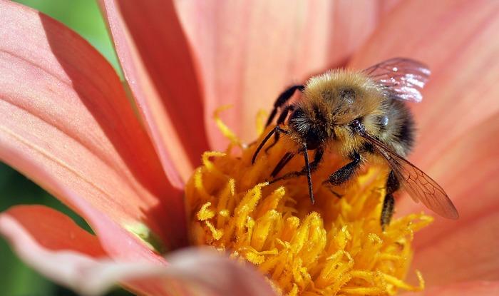 ところで、蜂蜜とメープルシロップの違いが気になる方もいるのでは。まず蜂蜜はその名の通り、ミツバチが花から蜜をとって巣にたくわえた蜜をいいます。