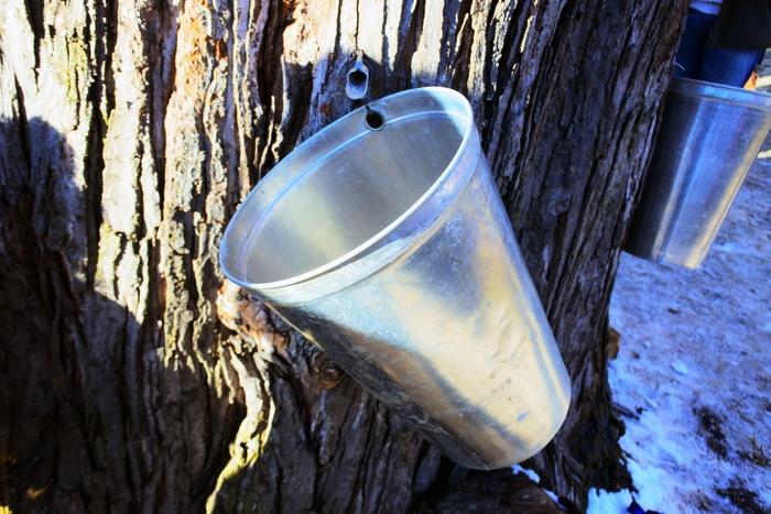 メープルシロップは、サトウカエデなどの樹液を採取してそれを煮詰めて作った琥珀色の甘味料で、カリウムやカルシウムなどが多く含まれており、蜂蜜よりカロリーが低く、独特の風味が特徴です。