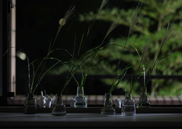 お月見に飾る花と言えばススキ。稲穂に見立てて飾るという説が一般的です。風情があって素敵ですが、この時期は「秋の七草」の時期にも当たります。秋の七草にはススキも含まれているので、もし秋の七草が揃えばそちらを飾ってみるのもおすすめです。