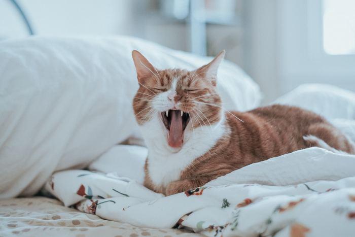 ゆっくりぐっすり眠りたい時には、お風呂に入るタイミングが大切です。お布団に入る2時間前を目安としてお風呂に入ると、安眠しやすいとされています。ぬるめのお湯にゆっくりと浸かりましょう。