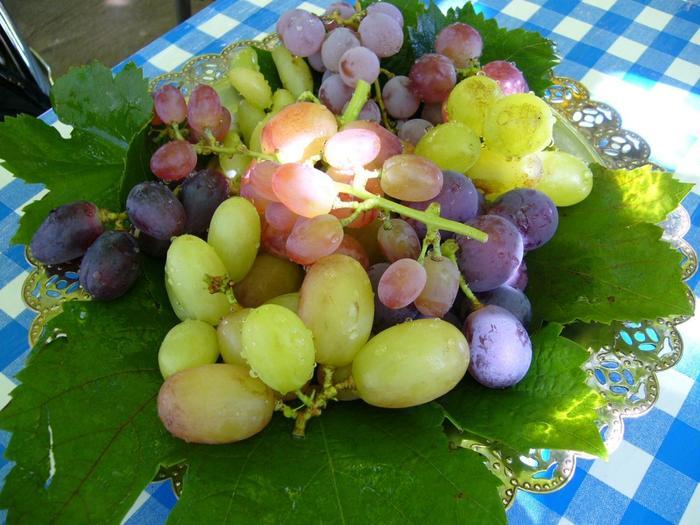 気になるブドウを取って味を確かめながら家族や友達とみんなでワイワイ食べれば、いつも以上に美味しさアップです♪農園で食べたあとは気になるブドウを自宅用やお土産にするのもおすすめです。