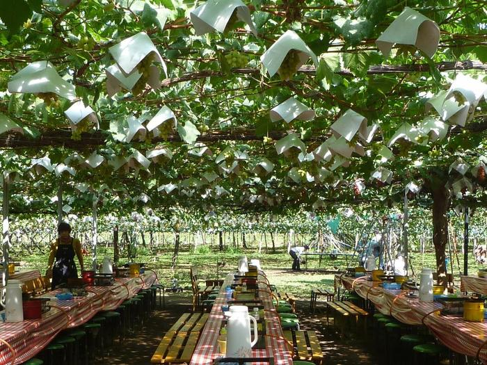 約3500坪の敷地は圧巻の景色。BBQはブドウの木の下で。まるで物語の中のような素敵な空間で味わうBBQの味は格別です。