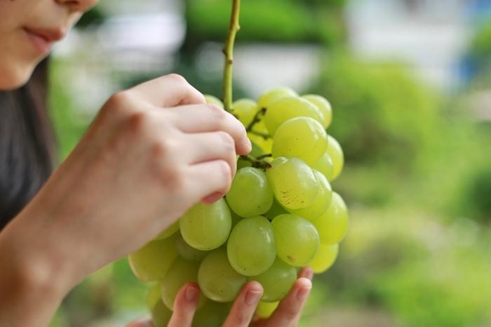 現在では巨峰のみならず、生産に関わる人達の努力によって次々においしい新品種が登場しています。フレッシュな生はもちろん、宝石のようなぶどうの果実がおいしいスイーツを彩っていますね。