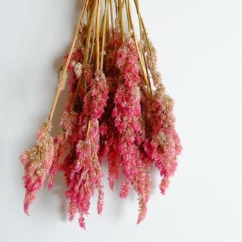花言葉からも分かるように、ケイトウはドライフラワーにしてもその深みのある色味をキープしやすいお花です。フレッシュな状態を楽しんだら、お部屋の隅に吊るしてドライに挑戦してみるのもいいですね。