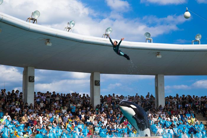 関東を代表する巨大水族館「鴨川シーワールド」は、海ほたるPAから車で約1時間10分程、海の近くにあるレジャー施設です。