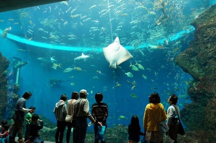 色とりどりの魚たちが泳ぐ大水槽は、時間を忘れて眺めていたくなります。他にもシャチのショーなども開催されているので、1日中楽しむことができますよ。