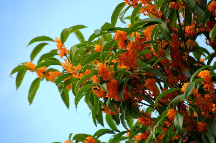 オレンジ色の小さな可愛らしいお花にぴったりの花言葉は、どれも思わずうなずいてしまいますね。すっと伸びるグリーンの葉っぱとたっぷりとついた小さなお花の対比もとてもお洒落です。