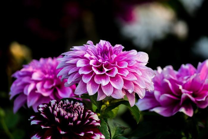 お部屋やテーブルを一気に秋の気分にさせてくれるものが木々やお花のアイテムです。秋は香りも彩りも存在感もある素敵な草花が豊富な季節。お気に入りのフラワーベースや器を使って食卓にも早速秋の草花を取り入れてみましょう。