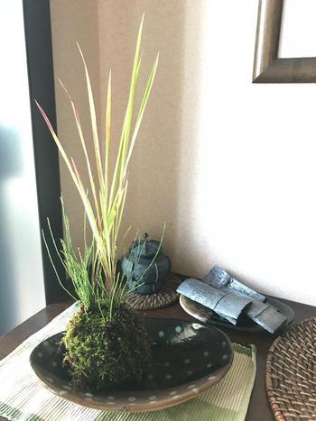 すーっと真っすぐに伸びた線が美しいチガヤを中心にした苔玉。和の雰囲気があり、とても洗練された印象です。