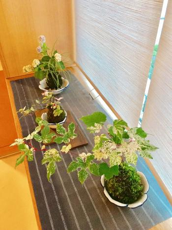 葉っぱに涼し気な斑入りのノブドウやハツユキカズラを中心に添えた苔玉は、植物の自然に流れるようなラインがとてもきれいで、ちょっぴり華やかですね。