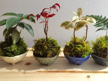 横一列に並べて飾るのも可愛いですね。植物の種類や葉の色を変えて、表情の違いをよく観察できそう。
