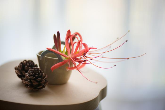 短くカットした彼岸花は、普段と面持ちが変わって面白いですね。松ぼっくりを一緒にアレンジして、秋らしさを一段と深めています。