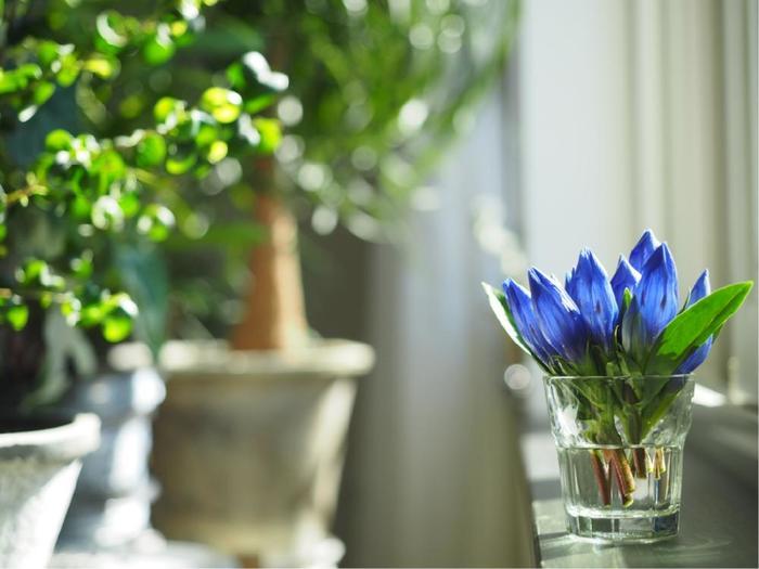 すっきりとしたリンドウのお花のシルエットを生かすには、ぎゅっと小さめのグラスに集めて先端のフォルムを際立たせるといいですね。緑の葉っぱをすこしだけプラスして、バランスを調整しています。