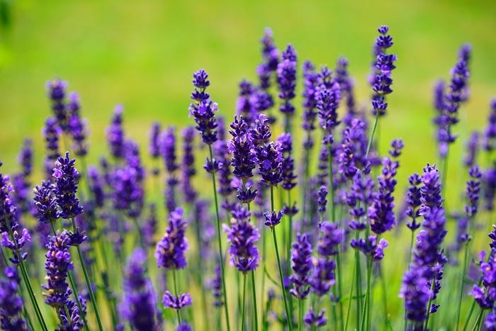 ラベンダー、ゼラニウム、カモミールなど、甘く華やかな香りは、癒しの効果が抜群です。 心落ち着く自分好みの香りを見つけましょう。