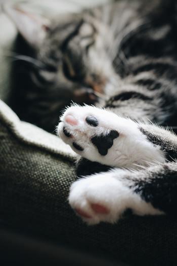 猫カフェというのはたくさんありますが、保護猫と里親を繋ぐ目的の「保護猫カフェ」があることをご存知でしょうか。実際に飼うのは難しくても、カフェを利用して売上につなげることも、社会貢献への第一歩になります。  人の手によって捨てられてりまう猫たちの問題を直視できる、大切な機会にもなるのではないでしょうか。