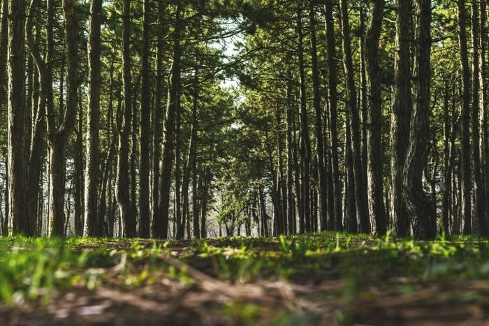 帰省や旅行で自然豊かな森や川へ出かけるのは心もリフレッシュできていいですよね。でもそこで捕まえた昆虫や草花はどうしていますか?同じ昆虫だから、捕まえて他の場所で放しても問題ないのかなとも思いますが、実は育った環境によって生きやすい環境は異なるもの。命を縮めることにもなりかねません。 いつまでも自然豊かな環境を残すために、むやみに捕まえたりするのはやめましょう。