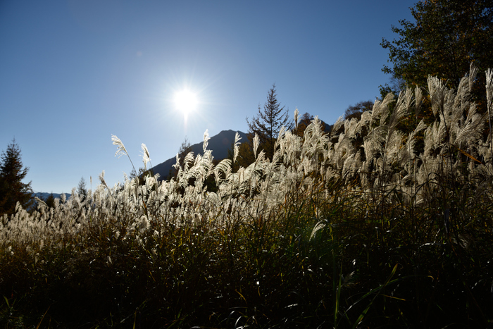 ロープウェイの中間地点にある「鍋平高原」には、自然散策路があり季節を身近で感じることができます。ビジターセンター「山楽館」もあり、露天風呂「神宝乃湯」で入浴もできますよ。