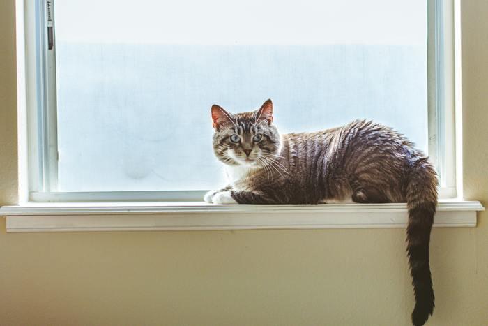 お部屋が寒く感じられる主な原因は窓と床が冷えるから。 ガラス製の窓は、外気温がダイレクトに伝わりやすいうえ、部屋の熱の多くを外に逃がしてしまう性質があります。 窓辺にいるだけで体が冷えくることもありますよね。