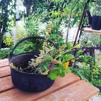 観賞用ハーブの卸先は園芸店が中心ですが、数年前からはフラワーアーティストの方に花材として販売する機会も増えているのだそう。また、研究機関からの依頼で薬草の苗を栽培したり、幼稚園や店舗の植栽を請け負うなど、幅広いお仕事を手がけていらっしゃいます。