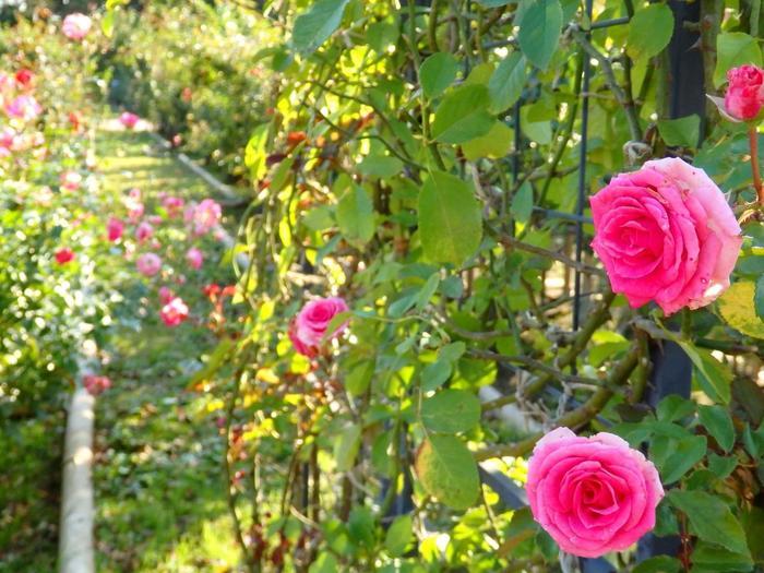武蔵野の面影が残る植物公園は、約48万平方メートルと都内最大級の広さを誇り、園内には約4,800種類、10万本・株の樹木が植えられており、四季折々の花景色を展開しています。